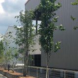 【千葉県 椎の森】新築工場の植栽工事