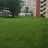 【本郷台】マンションの芝生