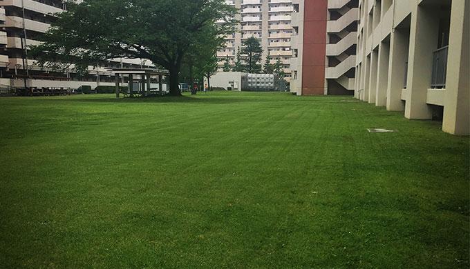 マンションの芝生